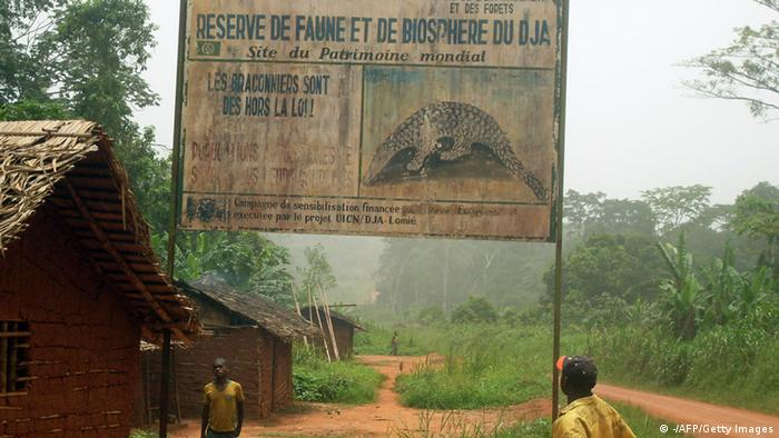 Dja Wildreservat in Kamerun (Foto: AFP/Getty Images)