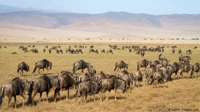 Ngorongoro Nationalpark in Tansania (Foto: kjekol - Fotolia.com)