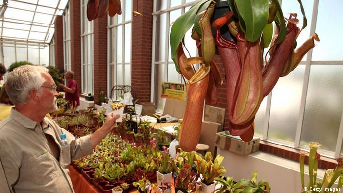Bildergalerie Fleischfressende Pflanzen (Getty Images)