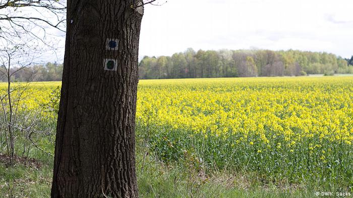 Scenery from the 66 Lakes Trail in Brandenburg, Copyright: DW / K. Sacks