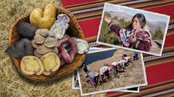 07.2014 DW Global Ideas / Kartoffel