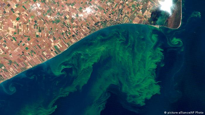 Satellite photo provided by NASA in August 2014 shows algae blooms on Lake Erie (picture-alliance/AP Photo)
