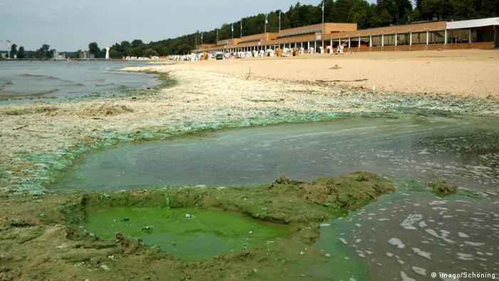 Cyanobacteria in the Wannsee lake Berlin