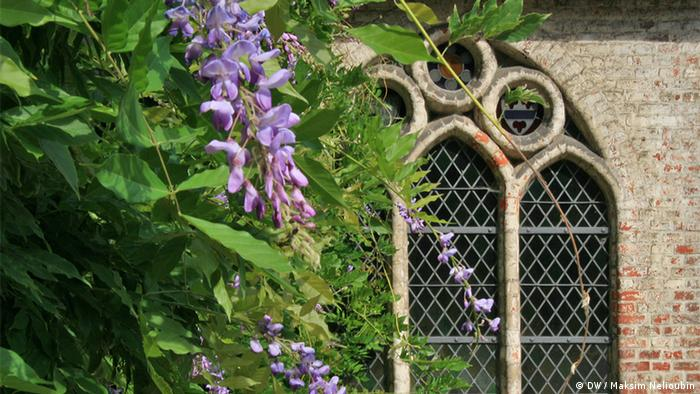 Готическое окно и монастырские глицинии