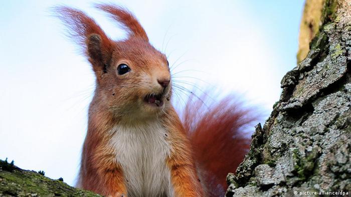 Eichhörnchen (picture-alliance/dpa)