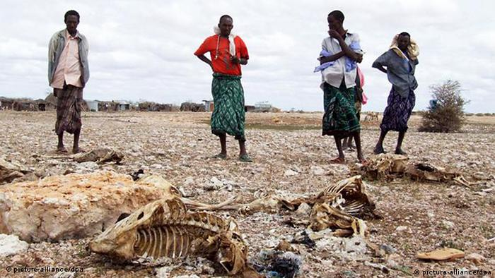 Shephards in Somalia stand in front of animal carcasses (Photo:dpa)