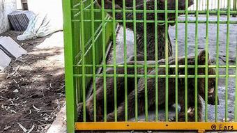 Katastrophale Tierhaltung in iranischem Zoo und Zirkus