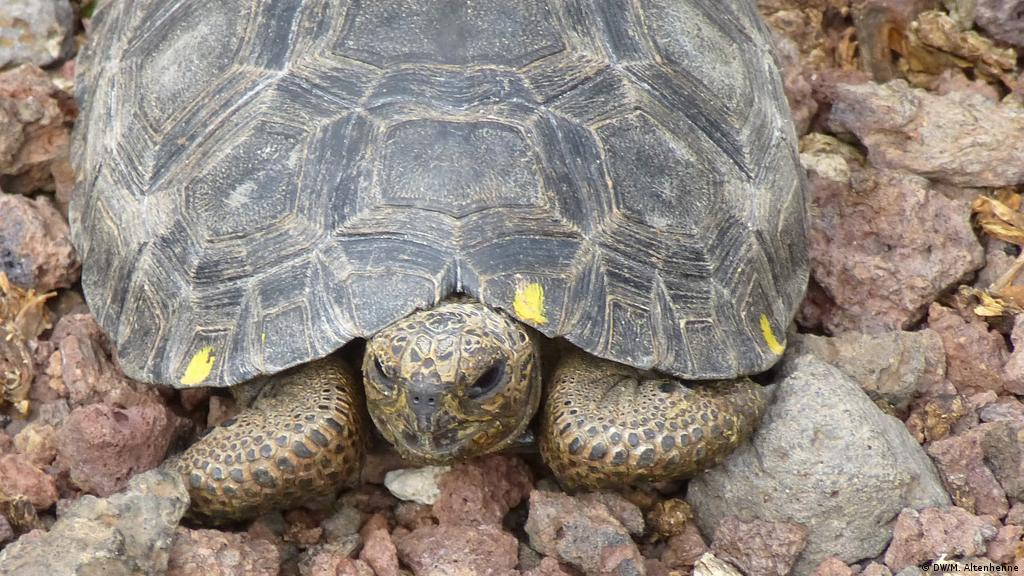 Galapagos Islands: 123 baby tortoises reported stolen   News
