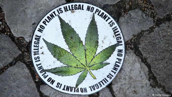 Califórnia, Massachusetts e Nevada legalizam maconha