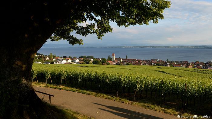 Deutschland Bodensee Spaziergang durch den Weinberg