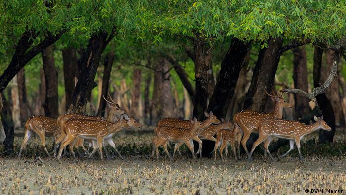 Bildergalerie Bangladesch Sundarbans Mangrovenwälder