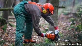 Το δάσος χρειάζεται σωστή φροντίδα