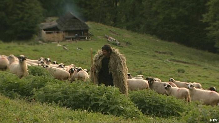 Rumänien - Hirte mit seiner Schafherde