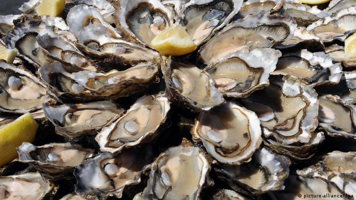 Устрицы - популярный морепродукт