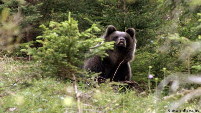 Звезды в мире животных: бунтарь Бруно