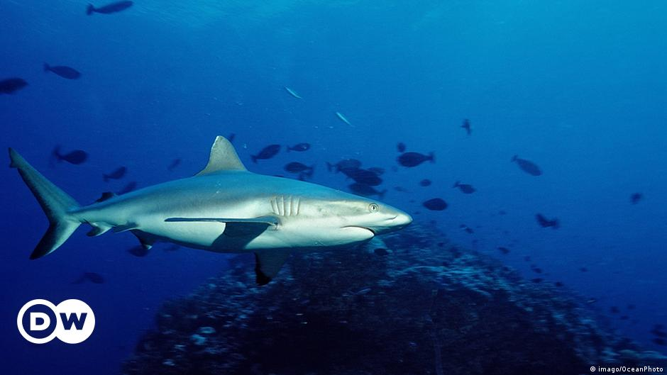 Shark kills surfer off Australian east coast | News | DW