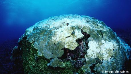 Bleached coral at Great Barrier Reef