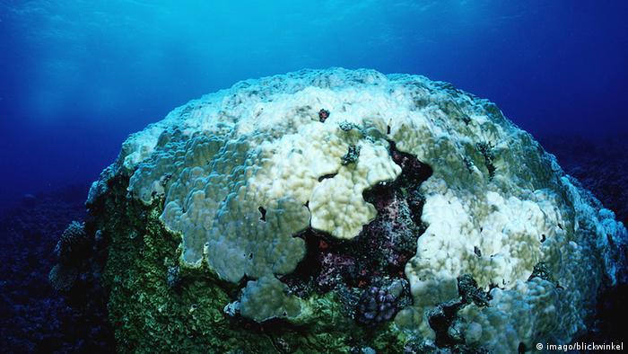 Australien Meeresschutzgebiet Great Barrier Reef Korallenbleiche