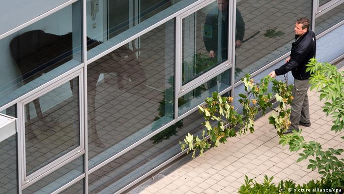Elch im Büro Dresden Deutschland