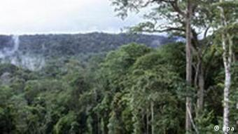 A rainforest in the west of the Democratic Republic of Congo, image provided by WWF