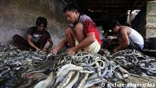 Schlachthaus für Schlangen in Indonesien