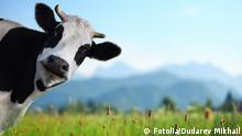 #55774465 - Cow © Dudarev Mikhail