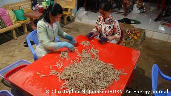 Workers check shrimp for quality and size at a sorting pla nt in Tran De, in Vietnam's Mekong Delta region (Photo: Christopher M. Johnson/BURN)