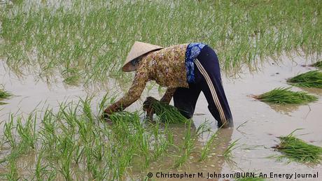 Climate change affects Vietnam's rice bowl | Environment | DW.DE | 29.09.2014