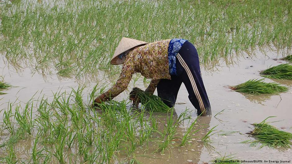 Climate change affects Vietnam's rice bowl | Environment| All topics from climate change to conservation | DW | 29.09.2014