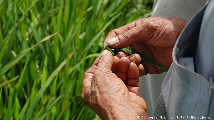 Landwirtschaft in der Mekong Delta Vietnam