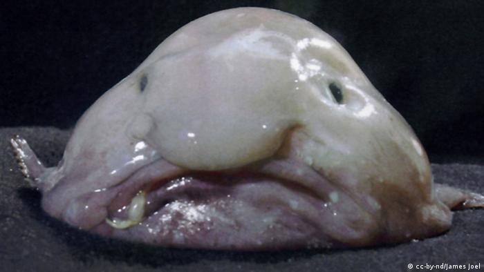 Weird Fish That Live Deep In The Ocean 9