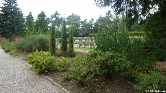 Аккуратные кусты и газоны