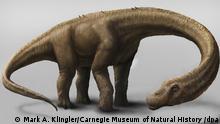 Titanosaurier Dinosaurier Dreadnoughtus schrani Argentinien