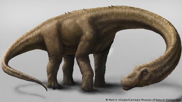 Dreadnoughtus schrani, otro titanosaurio hallado también en 2014 en Argentina.