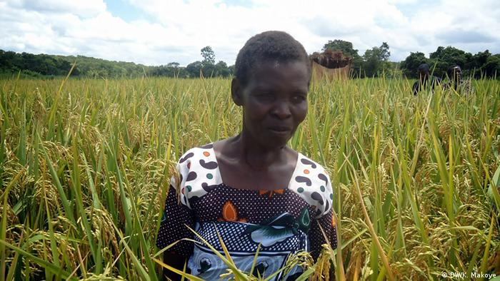 A female rice farmer stands inside her rice plantation in Tanzania.