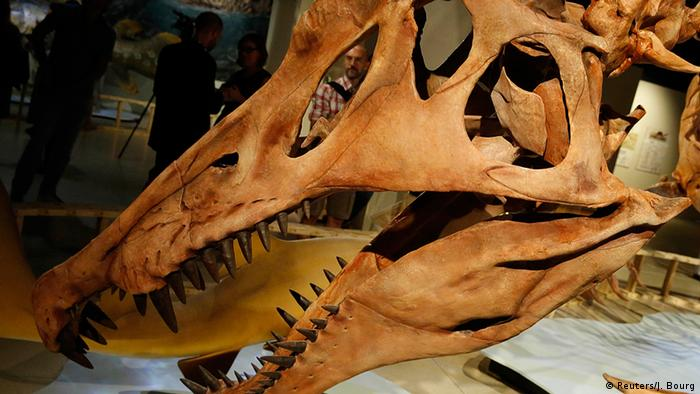 USA Spinosaurus Aegyptiacus in Washington