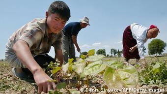 Usbekistan Landwirtschaft Archiv 2005