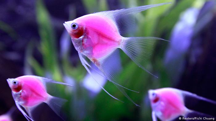 Taiwan Aquarium Expo 2014 ikan bercahaya rekayasa genetika