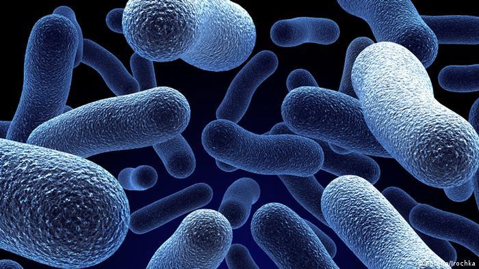 Bakterien (Fotolia/Irochka)