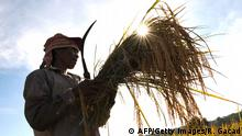 Symbolbild Bäuerin auf den Philippinen