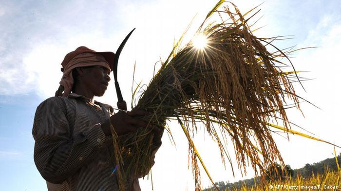 Symbolbild Bäuerin auf den Philippinen (AFP/Getty Images/R. Gacad)