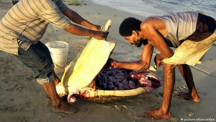 Schildkröten-Fang in Nicaragua (picture-alliance/dpa)