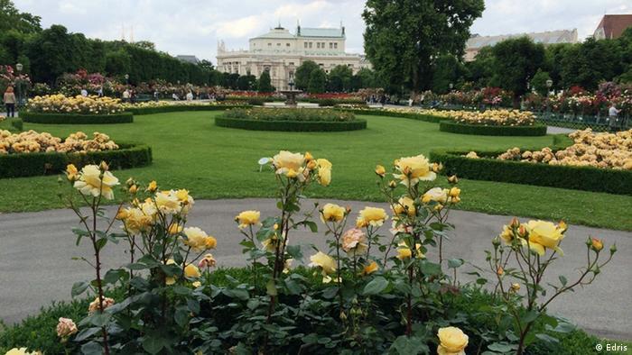Розы в парке Volksgarten