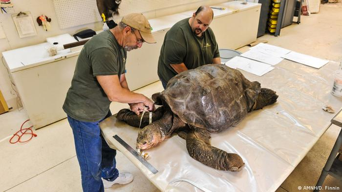 Ausstelllung zu Lonesome George im American Museum of Natural History