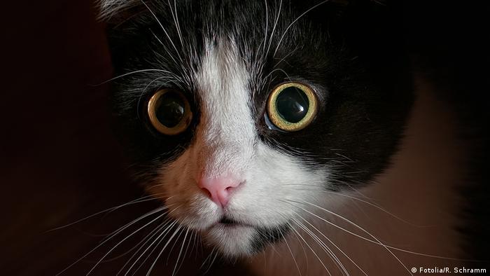Hiding cat (Photo: Richard Schramm - Fotolia)