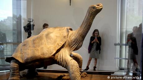 Lonesome George in New York