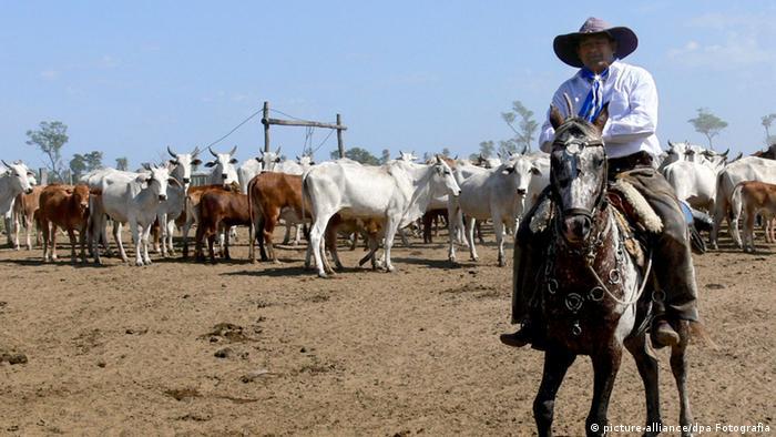 Paraguay Wirtschaft Viehzucht Handel (picture-alliance/dpa Fotografia)