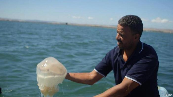 Tunisia: Jellyfish Scourge in the Mediterranean | All media content | DW.DE | 29.09.2014