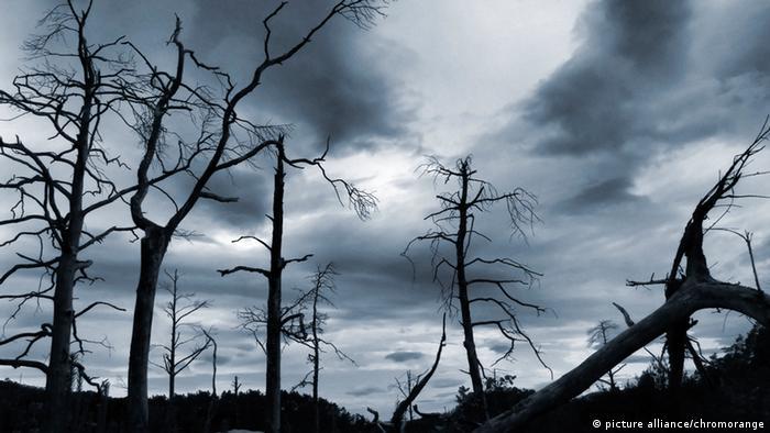 Symbolbild Waldsterben
