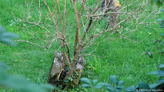 Одно из старых надгробий в так называемой Долине раввинов